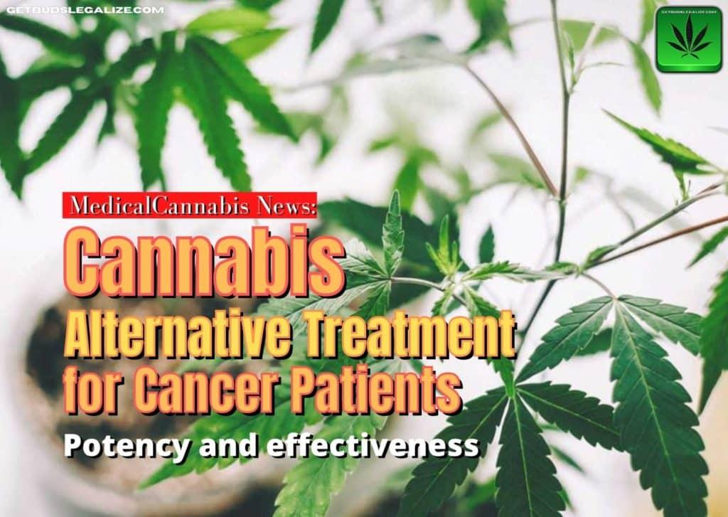 Cannabis Alternative Treatment for Cancer, medical, marijuana, weed, pot