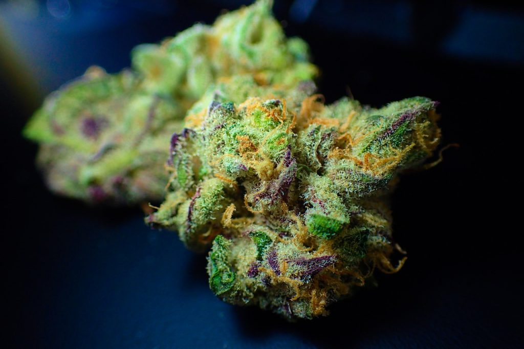 bud, cannabis, close up