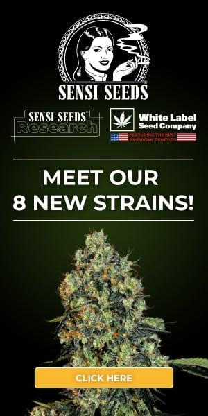Sensi Seeds Research, cannabis seeds, marijuana, feminized, strain, automatic, autoflowering, super skunk