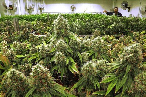 Decriminalization and legalization