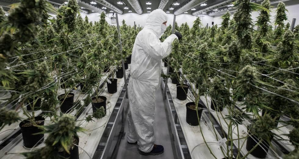 Peru cannabis legalization news
