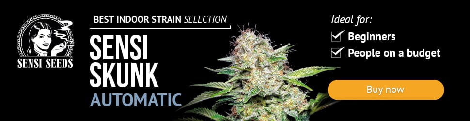 Sensi Seeds Research, cannabis seeds, marijuana, feminized, strain, automatic, autoflowering, skunk