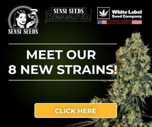 Sensi Seeds Research, cannabis seeds, marijuana, feminized, strain, automatic, autoflowering, skunk