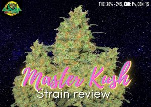 Master Kush strain review, sensi seeds, cannabis, marijuana, weed, plant, pot, getbudslegalize