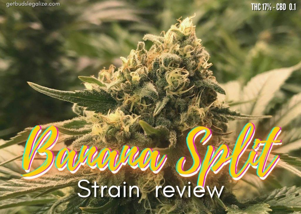 Banana Split strain review, cannabis, weed, marijuana, pot, plant
