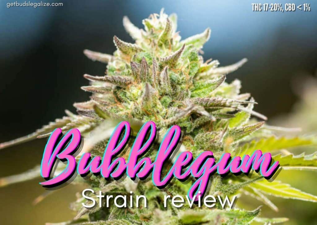 Bubblegum strain review, cannabis, marijuana, weed, pot, plant