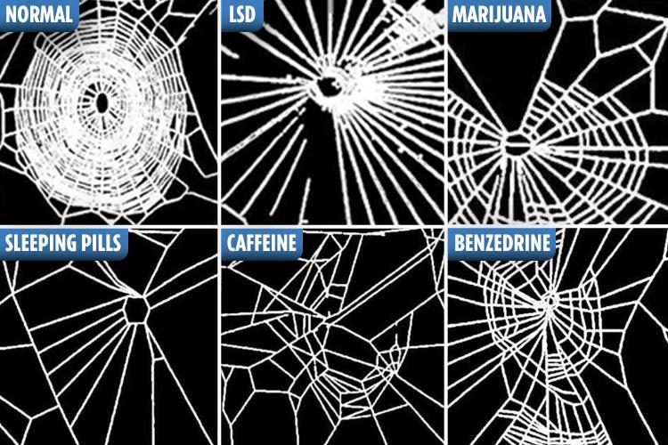 Spiders on drugs