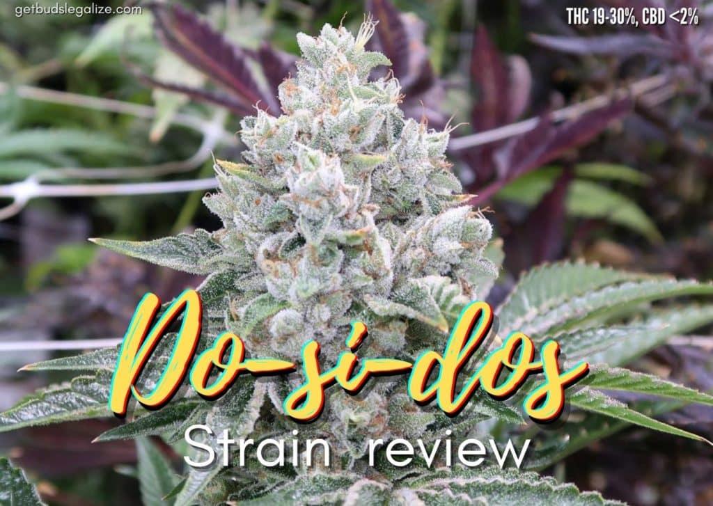 Do-si-dos strain marijuana review, cannabis, weed, pot, plant