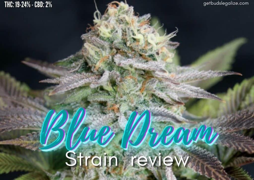 BLUE DREAM strain review, cannabis, marijuana, weed, pot, plant