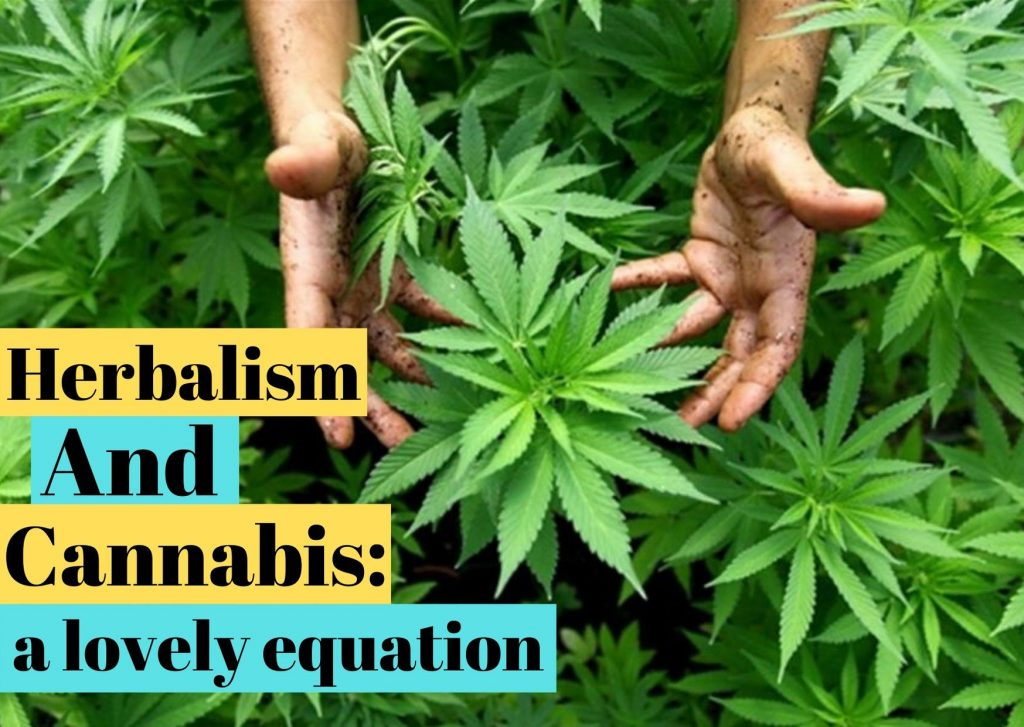 herbalism and cannabis