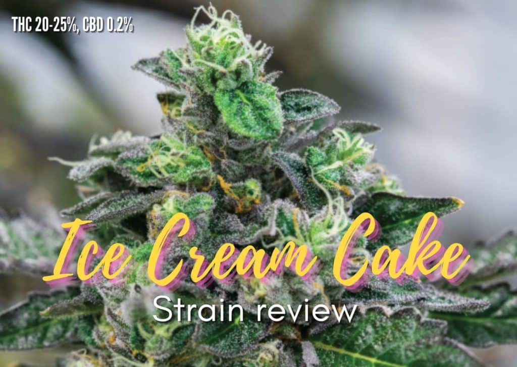 Ice Cream Cake Strain review, cannabis, marijuana, weed, pot