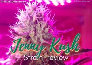Jenny Kush strain marijuana review, cannabis, marijuana, weed, pot, plant