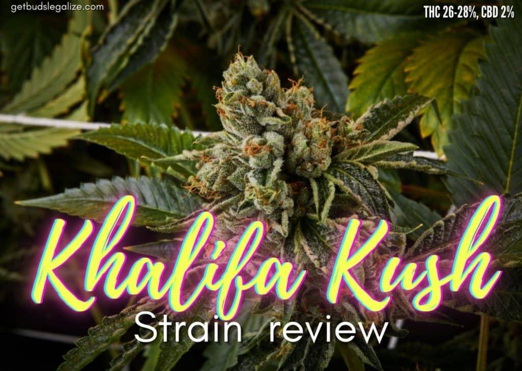 Khalifa Kush strain review, cannabis, marijuana, weed, pot, plant