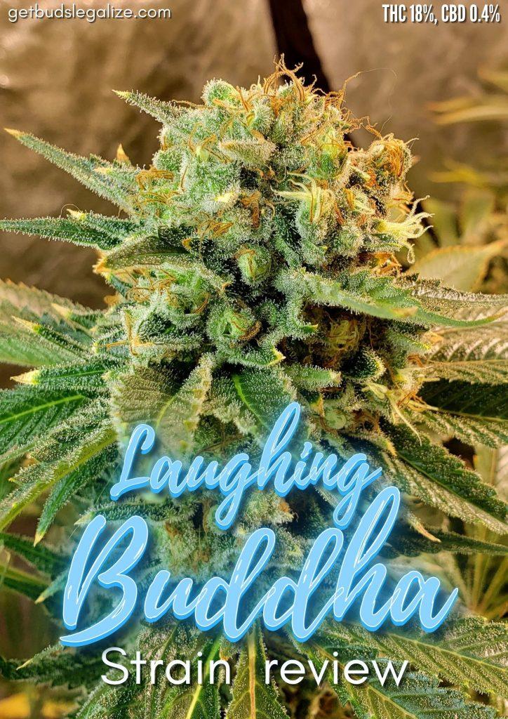 Laughing Buddha strain review, cannabis, marijuana, weed, pot, plant, seeds, yeald