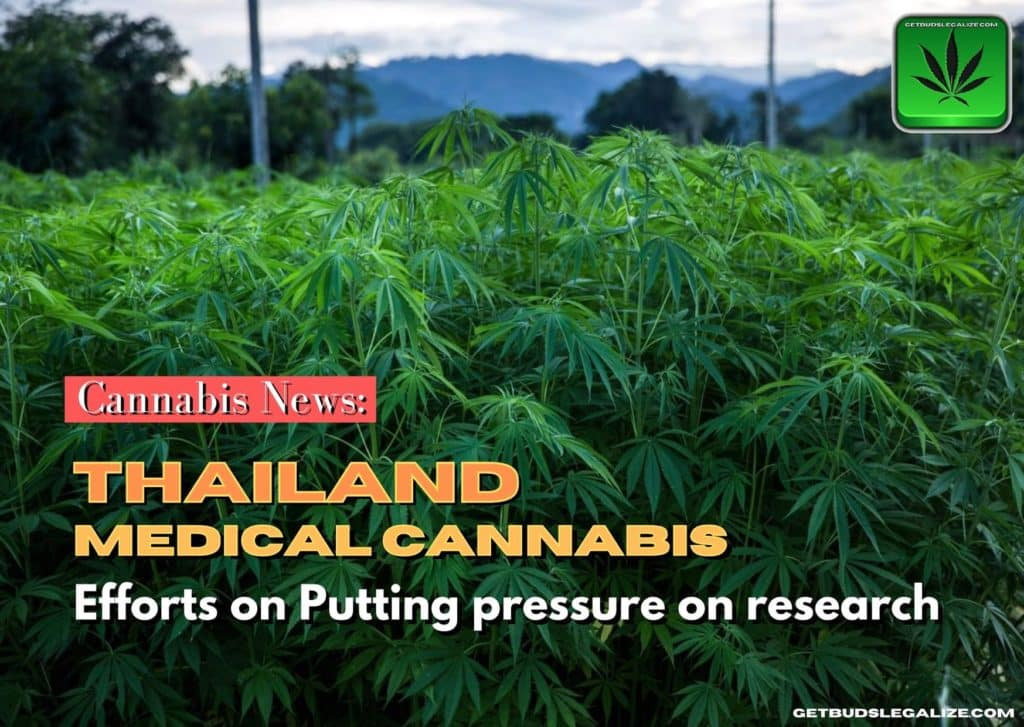 Efforts on Putting pressure on Medical Cannabis Research in Thailand, marijuana, weed pot, cannabis news