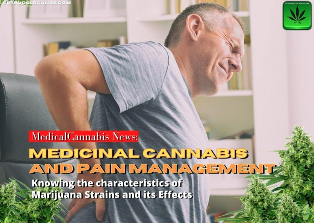 Knowing the characteristics of Marijuana Strains and its Effects: Medicinal Cannabis and Pain Management, marijuana, weed, pot