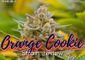 Orange Cookie strain review, cannabis, marijuana, weed, pot, plant