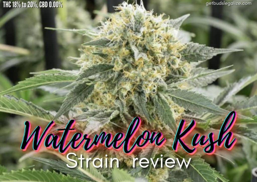 Watermelon Kush strain review, cannabis, marijuana, weed, pot, plant