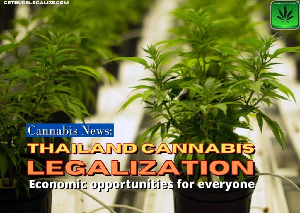 Thailand's path to Cannabis Legalization, marijuana, weed, pot