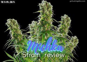 michka strain review, cannabis, weed, pot, marijuana, sensi seeds