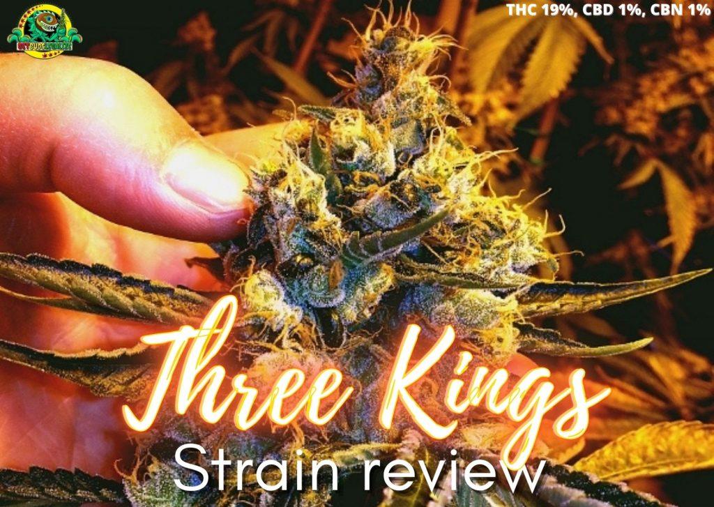 Three Kings strain review, cannabis, marijuana, weed, pot, plant, seeds