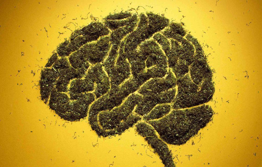 Beneficial impacts of Endocannabinoid system, cannabis, weed, marijuana, pot