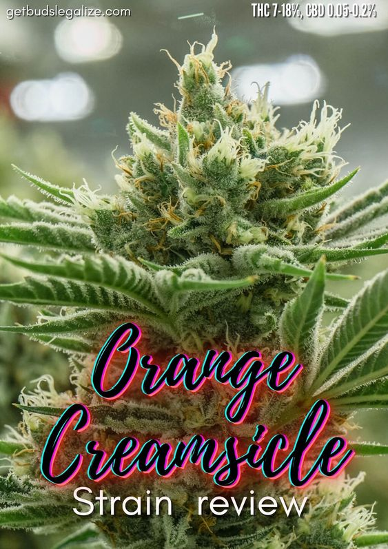Orange Creamsicle strain marijuana , cannabis, weed, plant, seeds, pot, medicalreview