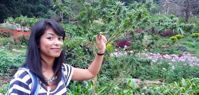 MARJIUANA THAILAND
