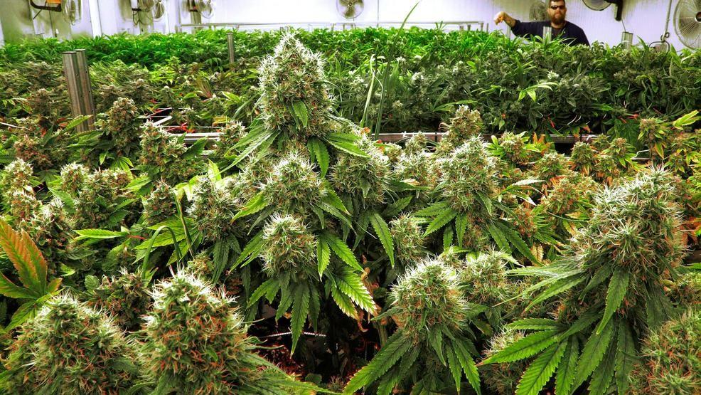 Oklahoma Medical Marijuana flower