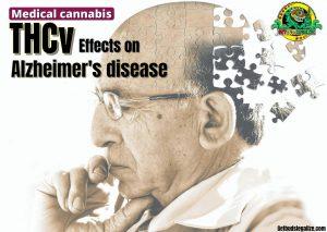 THCv Effects on Alzheimer's disease, thc, cbd, cannabis, marijuana, weed, pot, oil plant medical