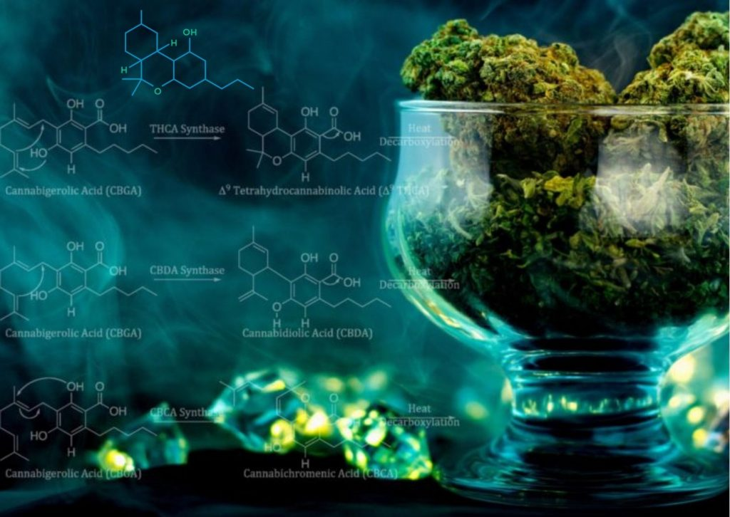 What is THCv and How it can help Your Health?, cannabis, marijuana, weed, medical, pot, CBD, THC
