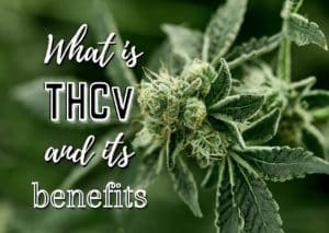 What is THCv and its benefits, weed, cannabis, marijuana, pot