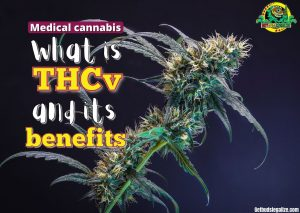 What is THCv and its benefits, thc, cbd, medical, cannabis, marijuana, weed, pot plant, seeds, flowering