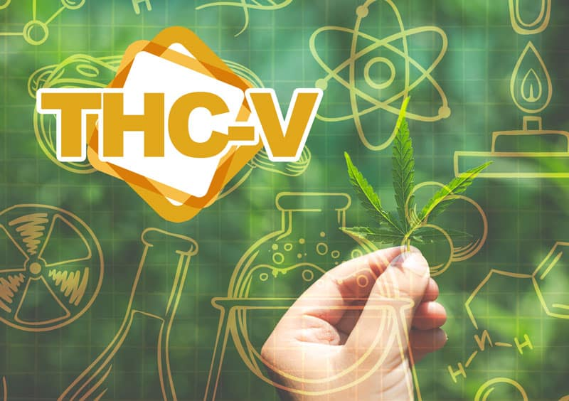 thcv and alzheimers (1)