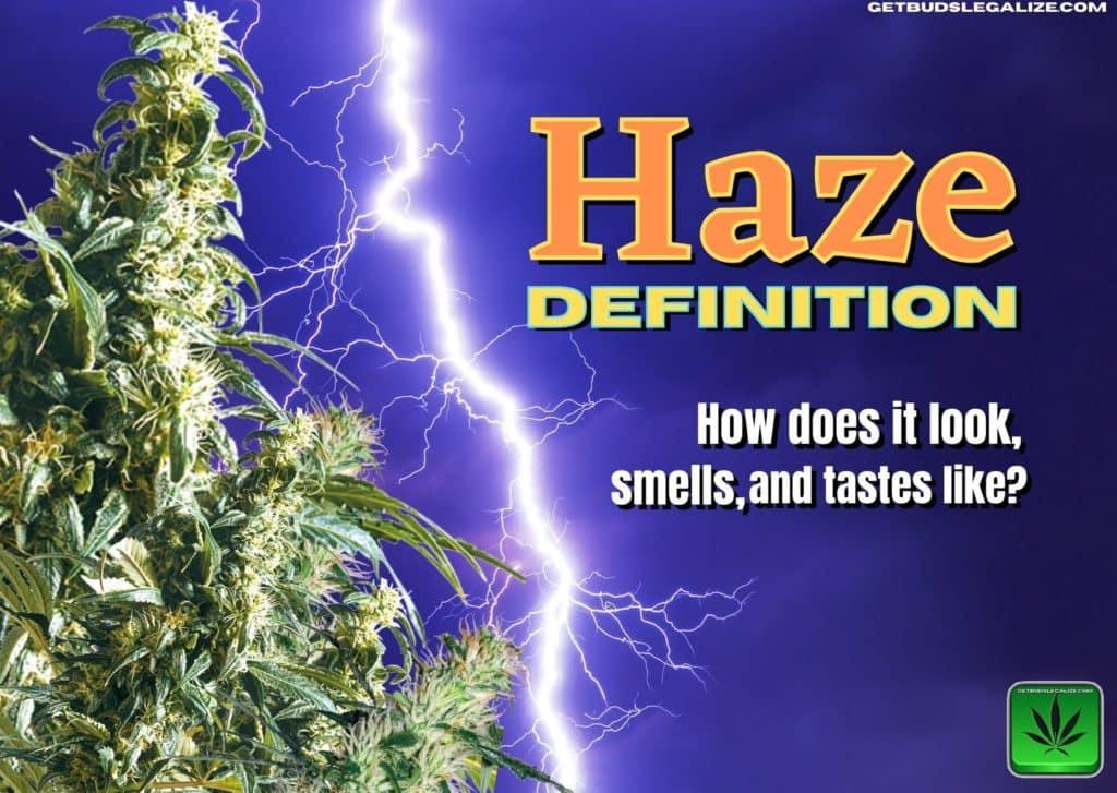 haze-definition, strain, cannabis, marijuana, weed, pot, plant, seed, effect, taste, look
