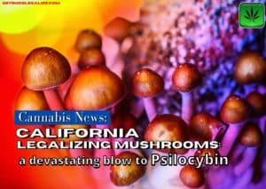 legalized mushrooms devastating California, magic mushroom, psycosibin, cannabis, weed, marijuana, pot
