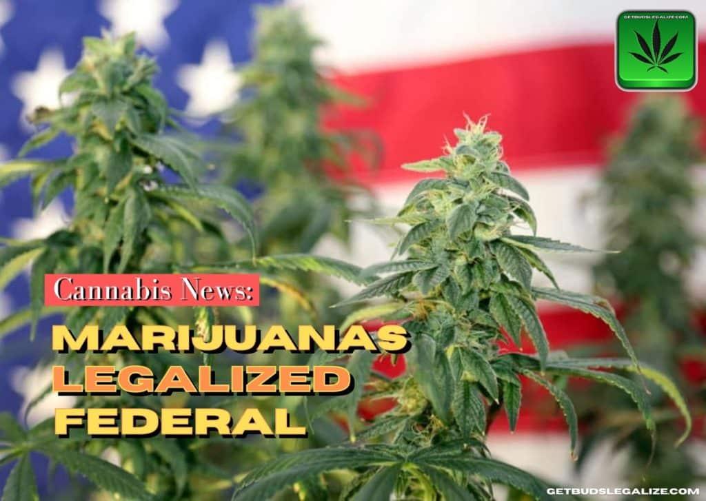Marijuanas Legalized Federal, cannabis news, weed, pot, plant, legalization