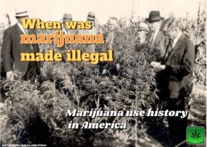 When was marijuana made illegal, history, cannabis, weed, pot, plant, america