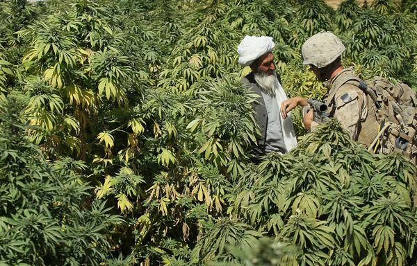 weed strain history kush cannabis flower