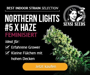 sensi seeds feminized seeds all strain special prize, cannabis seeds,feminized, autoflower