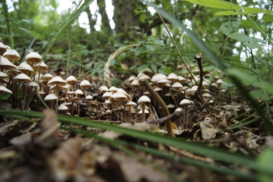 Denver legalizing mushrooms update in 2020