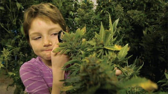 The leukemia survival rate for 3-year-old boy with Cannabis treatment