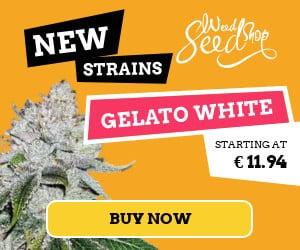 sensi seeds feminized seeds all strain special prize