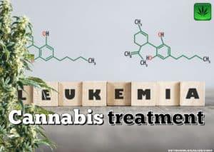 leukemia cannabis treatment, medical marijuana, weed, pot, survival rate, cure