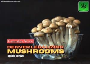Denver legalizing mushrooms, magic mushrooms, cannabis news, psycosibin