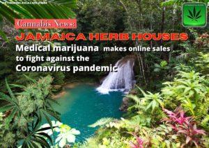 "Capital de Jamaica ""herb houses"" coronavirus and cannabis, covid19, marijuana, weed, pot"