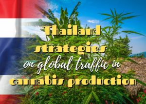 Sensi Seeds Cannabis in Thailand – The Laws,