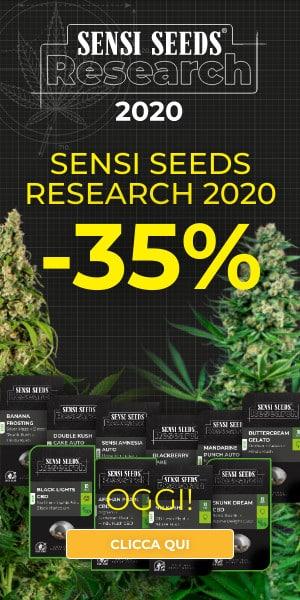 sensi seeds feminized seeds all strain special prize, cannabis seeds,feminized, autoflower