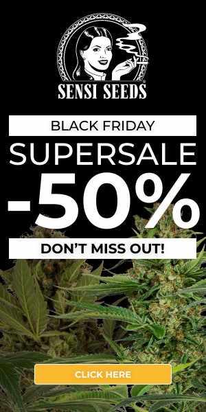 sensi seeds, black friday, cannabis, marijuana, weed, pot