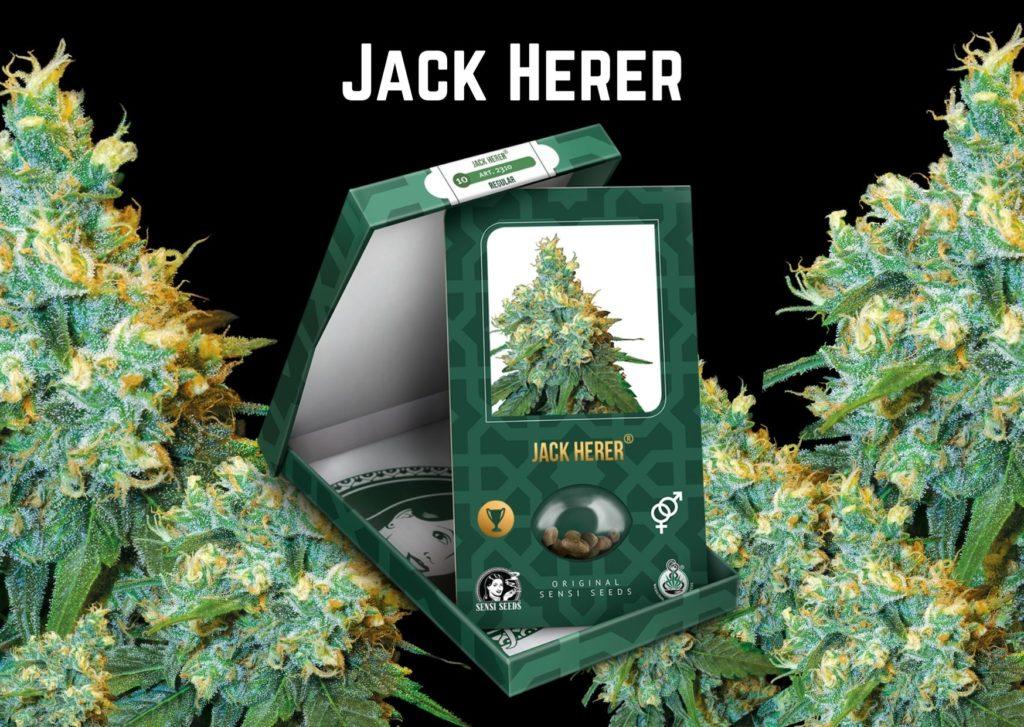 jack herer seeds, cannabis, marijuana,m weed, pot, sensi seeds